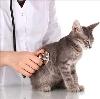 Ветеринарные клиники в Ухте